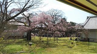 20170402醍醐寺(その169)
