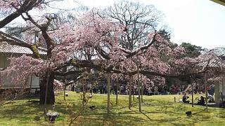 20170402醍醐寺(その170)