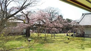 20170402醍醐寺(その171)