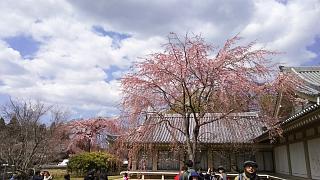 20170402醍醐寺(その172)