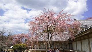 20170402醍醐寺(その173)