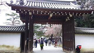20170402醍醐寺(その179)