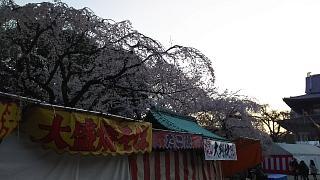 20170404増上寺(その1)