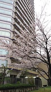 20170408お花見(その7)