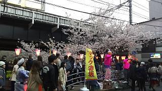 20170409目黒川の花(その87)