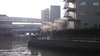 20170410お花(その2)