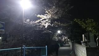 20170410二ヶ領水(その5)