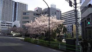 20170412お花(その2)