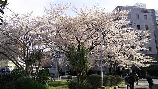 20170412お花(その3)