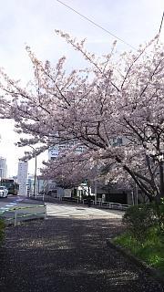 20170412お花(その4)