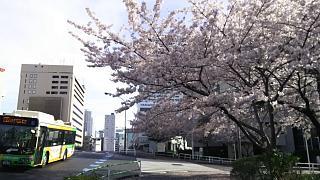 20170412お花(その5)