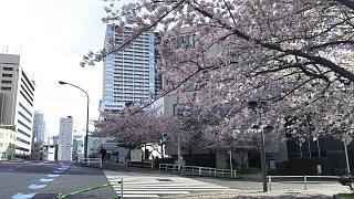 20170412お花(その10)