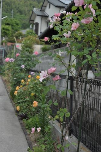 roses20170512-7.jpg