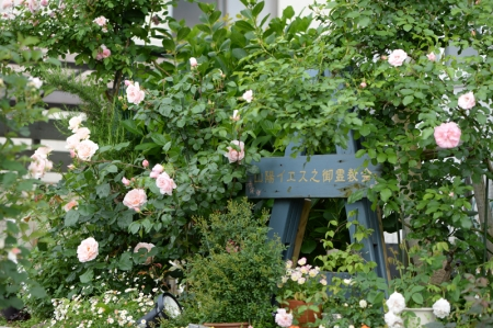 roses20170517-1.jpg