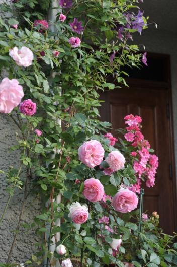 roses20170519-1.jpg