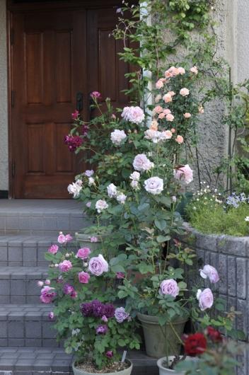 roses20170519-2.jpg