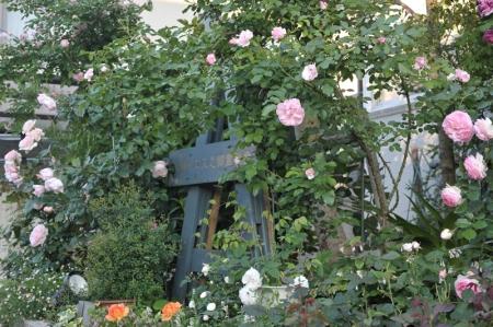 roses20170519-5.jpg