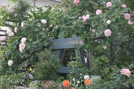 roses20170521-1.jpg