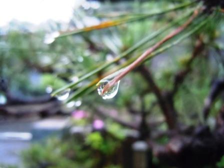 雨の雫1(2017.6.24)