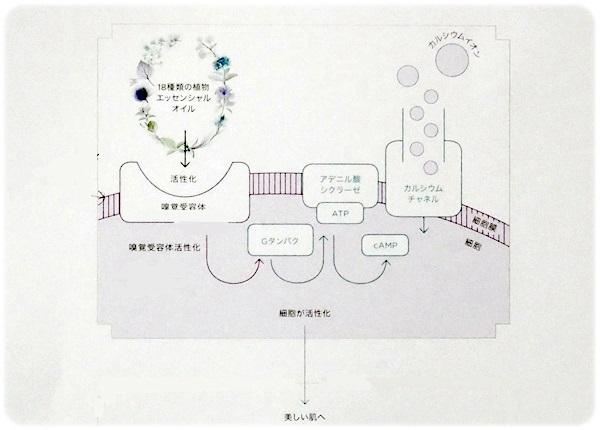 sayomaru21-200a.jpg