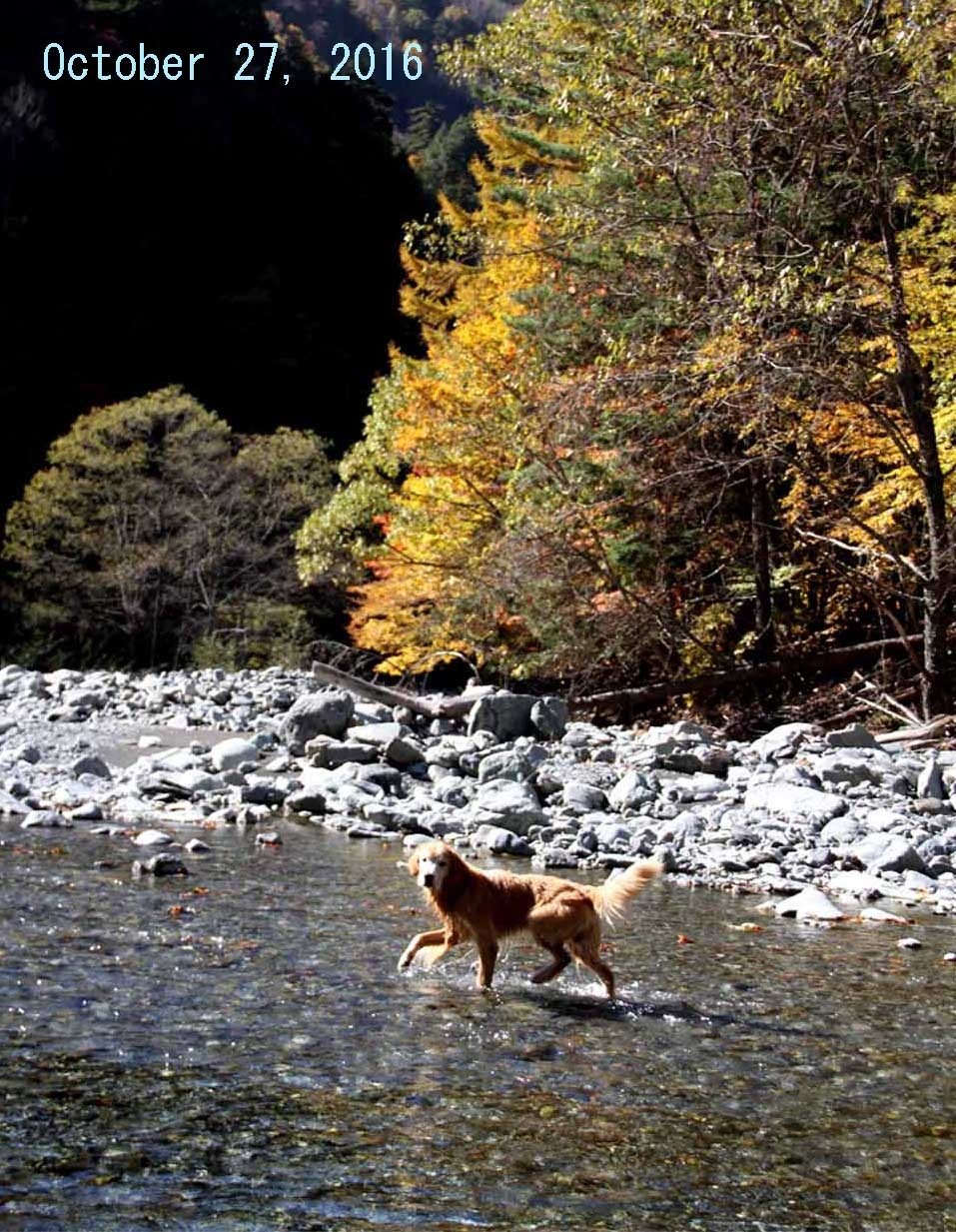 去年秋の三峰川(1)
