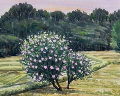 丘陵の木槿