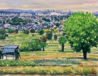 柚子のなる丘