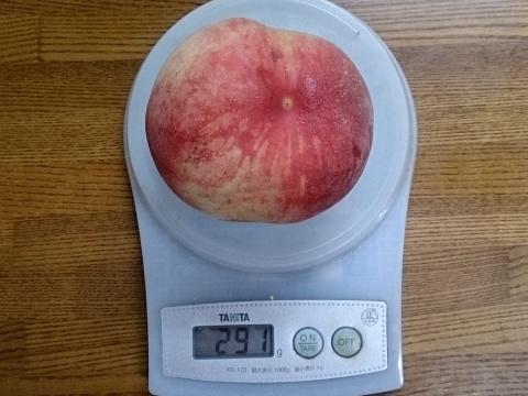 桃初収穫170630