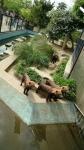 京都市動物園その5