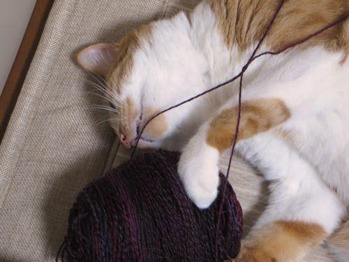 糸買うべきだった?