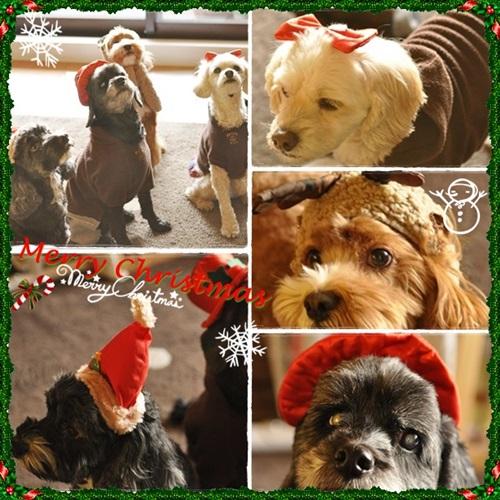 ワンズクリスマス