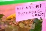 あおむし (1)