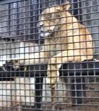 動物園 (25)