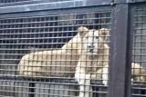 動物園 (29)