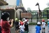 動物園 (43)