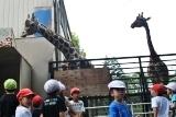 動物園 (44)