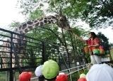 動物園 (50)
