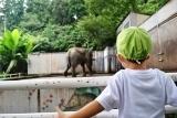 動物園 (53)