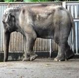 動物園 (55)