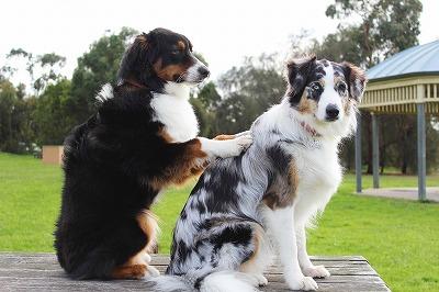 犬の皮膚病を解決