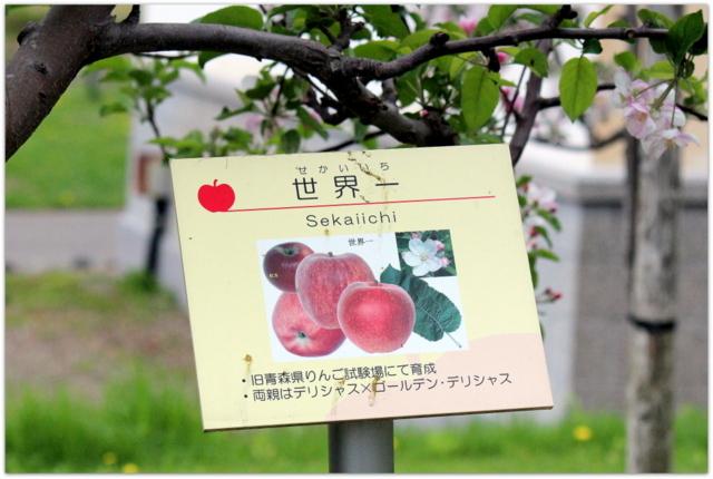 青森県 弘前市 りんご公園 りんご 花 写真 世界一