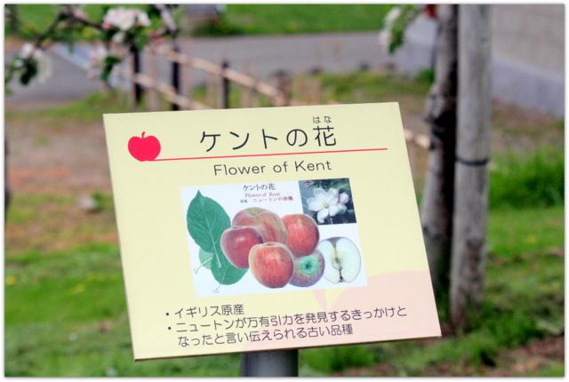青森県 弘前市 りんご公園 りんご 花 写真 ケントの花