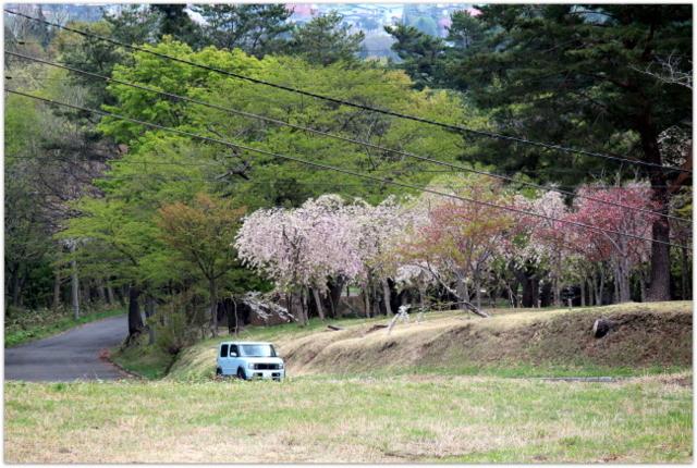 青森県 弘前市 観光 登山 岩木山 カタクリ 桜林公園