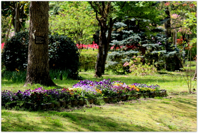 青森県 弘前市 弘前公園 弘前城 弘前城植物園 観光 写真