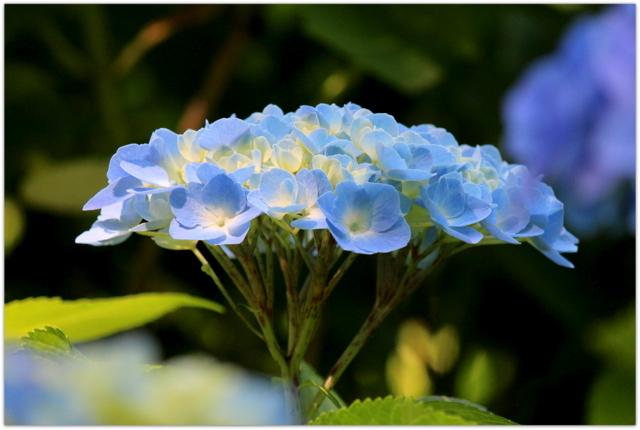 青森県 弘前市 弘前公園 弘前城 植物園 写真 花 観光