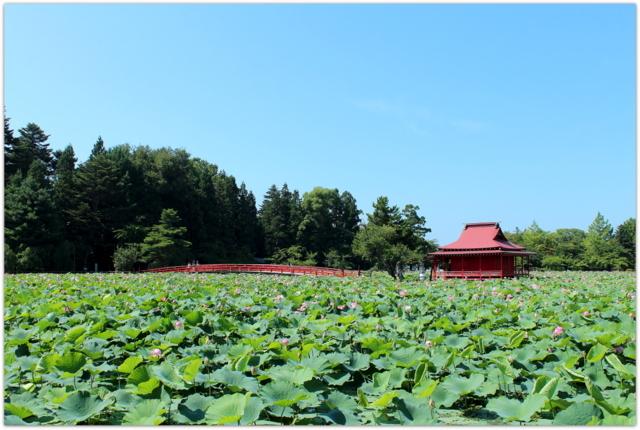 青森県 平川市 猿賀神社 猿賀公園 観光 写真 蓮の花 蓮池
