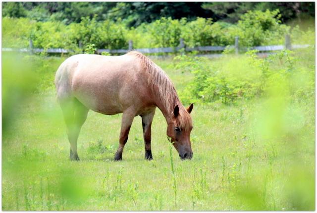 青森県 八甲田山 馬 写真