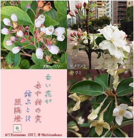 170509果実の花