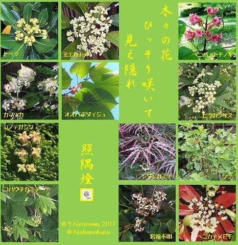 170523木々の花