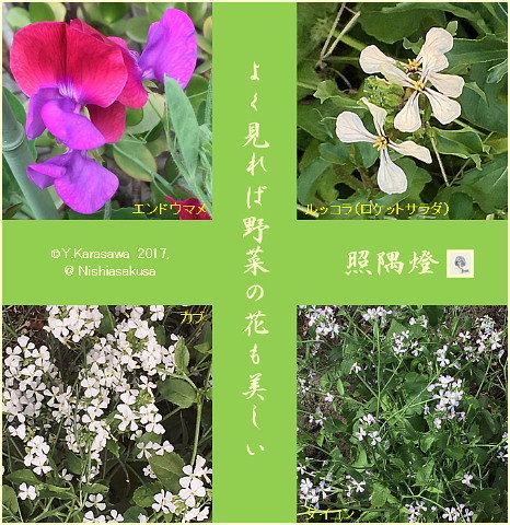 170527野菜の花